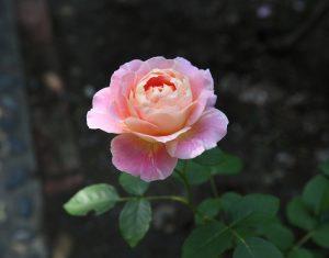クロード・モネ:Claude Monet 05