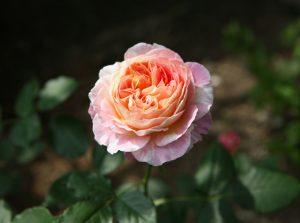 クロード・モネ:Claude Monet 01