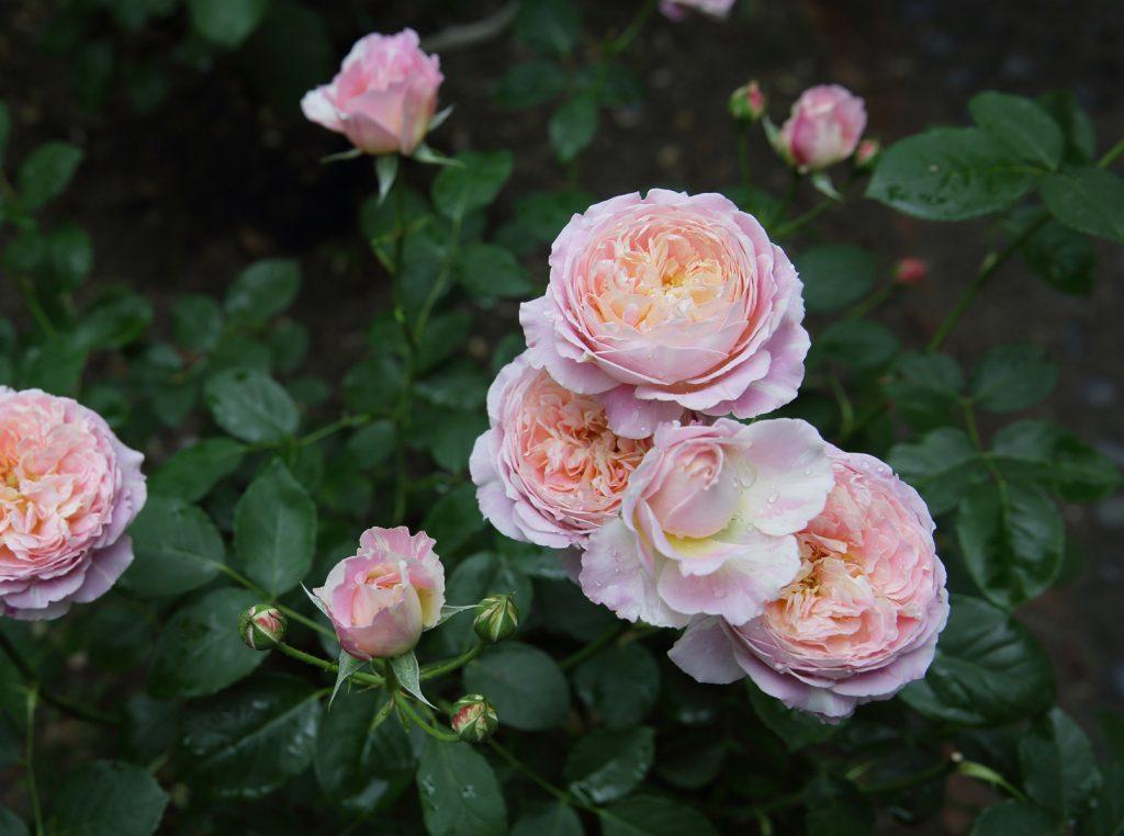 クロード・モネ:Claude Monet 09 L
