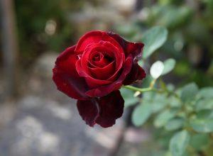 ベルサイユのばら:La Rose de Versailles 03