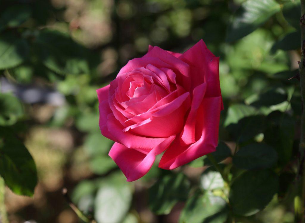 マリア・カラス:Maria Callas 11 L