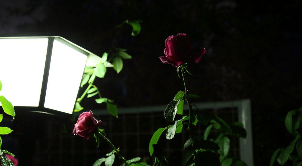 マリア・カラス:Maria Callas 14 L
