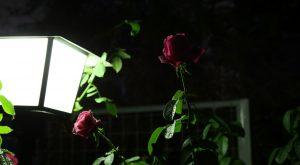 マリア・カラス:Maria Callas 14